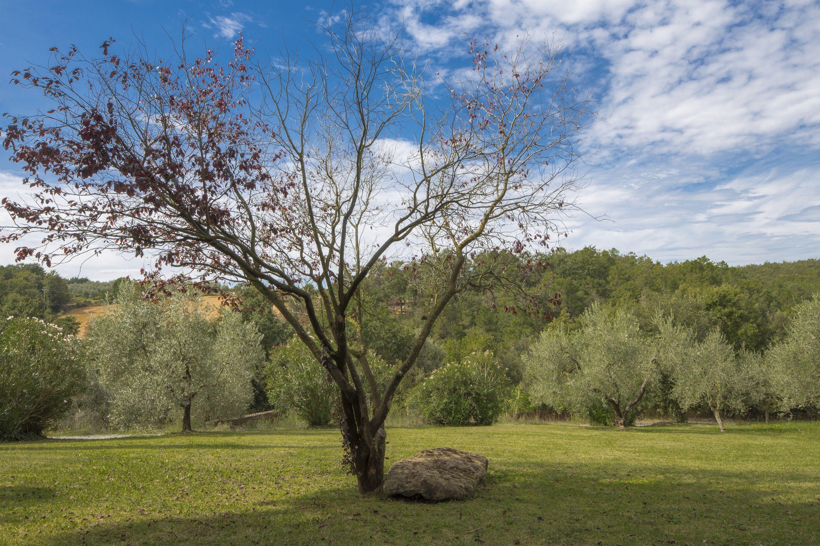 Apartment Bosco Lazzeroni Residence - Nabucco Holiday Home photo 16984552