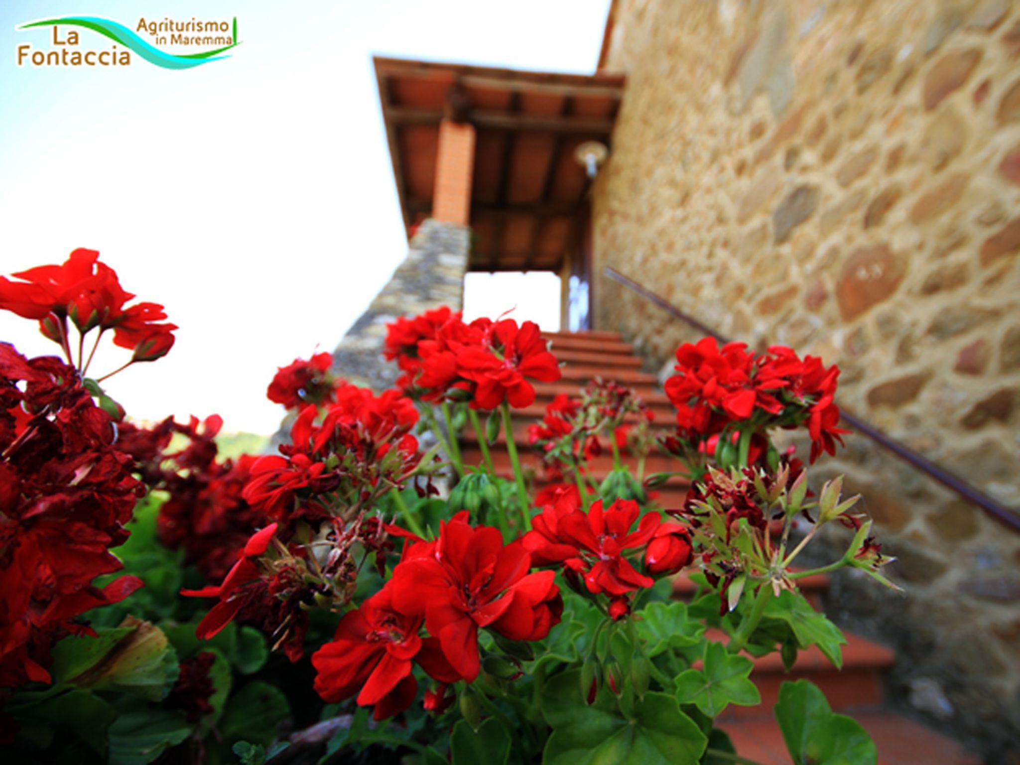 Villa Fontaccia - Villa Fontaccia photo 13831175